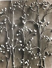 1942 FOTO ORIGINALE STAMPA ROTOCALCO PIASTRA 15. Karl Blossfeldt astratto botanico