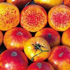 TOMATO 'Pineapple' 25+ seeds UNUSUAL HEIRLOOM non gmo vegetable garden orange