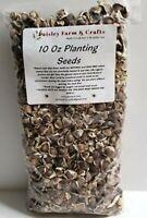 Moringa Oleifera Seeds - Paisley Farm & Crafts