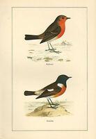 Vintage Uccello Stampa ~ Pettirosso & Saltimpalo