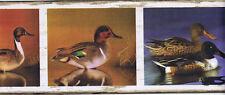 Beautiful Ducks in Frames Wallpaper Border  FDB03844M