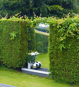 Garden acrylic safety mirror