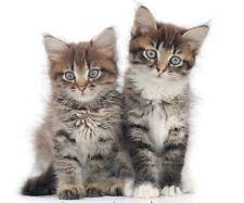 """Counted Cross Stitch """"Kittens"""" by Andrea's Designs"""