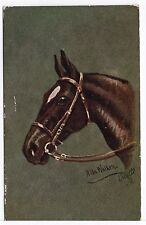 Horses Heads Series Tuck Old Horse Animal Art Postcard from 1927