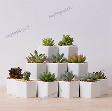 1x Hexagon White Ceramic Succulent Planter Miniature Flower Pots Office Decor
