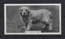 1938 Uk Dog Body Photograph Art John Sinclair Cigarette Card Clumber Spaniel