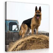 CANVAS Wandbild Leinwandbild Bild Schäferhund HUND Gras Tier Natur  3FX11373O5
