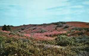 Vintage Postcard Autumn on the Moors Nantucket MA Bromley and Company