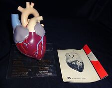 Vintage Merck Heart Anatomical Model with Manual Cardiac Anatomy Pharmaceutical
