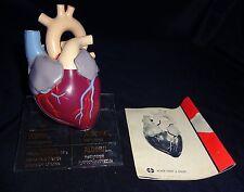 Vintage Merck Heart Anatomical Model with Manual