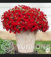 Mini Calibrchoa Million Bells Annual Flowers Bonsai Colors 100 PCS Seeds Balcony