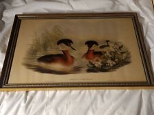 Two Lithos by J Gould HC Richter Podiceps Auritus & Rubricollis by Walter & Cohn