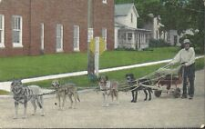 Rare  Postcard, Sled Dogs, Summer Training pulling Cart