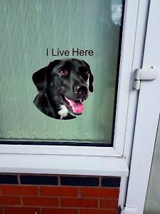 "Labrador dog ""I LIVE HERE"" Window/Door sticker Decal"