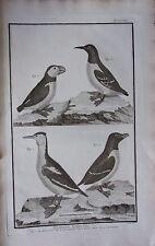 GRAVURE ORIGINALE CUIVRE DE MARTINET 1768 GREBE HUPE GUILLEMOT MACAREUX PINGOIN