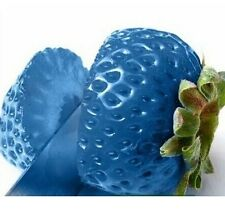 FD792 Strawberry Seeds Nutritious Delicious Fruits Seed Strawberries Blue 50PCs#