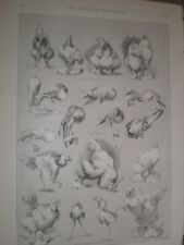 Nature's Fitful Moments Sketches at the Dairy Show Louis Wain 1890 prints ref AR
