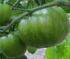20 graines de TOMATES GREEN ZEBRA BIO