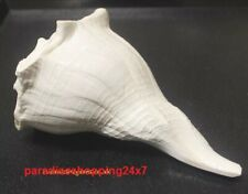 HINDU RELIGIOUS LARGE RIGHT HAND DAKSHINAVARTI SHANKH LAKSHMI CONCH INDIA POOJA