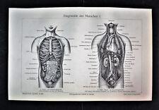 1902 Original Litografia.INTERNO DELL'UOMO 4 Tav. Eingeweide des Menschen.Meyers