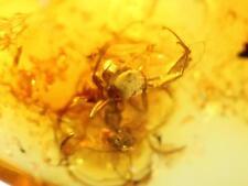 *HHC* Baltic Amber, Fossil inclusion, Araneae: Araneida, Spider (SKU #2-98)