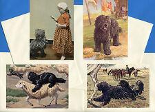 Hugarian Puli Pack Of 4 Vintage Style Dog Print Greetings Note Cards