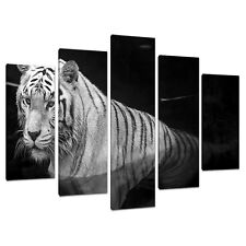 Split Canvas 5 Piece Multi Panel Five Part Set UK White Tigers 5020
