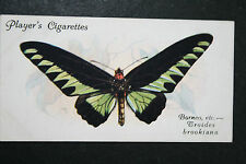 Rajah Brooke's Birdwing   Butterfly    Vintage 1930's Colour Card