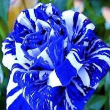 HOT 30pcs Rare Dragon Rose Flower Seeds Garden Plants Seeds Flower Seeds