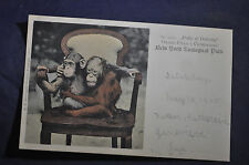 1905  'Polly & Dohong' Orang Utan & Chimp New York Zoological Park Postcard