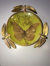 Entomologie Coupelle Ancienne papillon Art Deco