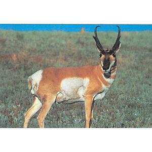 """Delta Large Game Paper Target, Antelope, 28"""" x 42"""""""