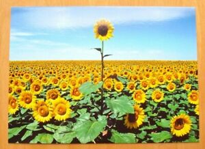 """A Million & One Thanks!"" AVANTI Sunflowers THANK YOU CARD"