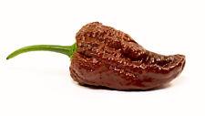 Chocolate Bhutlah Dark Brown Hot Chili Pepper Seeds 10 PCS WORLD'S HOTTEST!