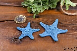 Set 2 Natural Blue Knobbly Starfish Aquarium, Wedding Party Photography Craft