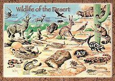 Wildlife of the Desert, Jackrabbit, Coyote, Gila Monster etc. -- Animal Postcard
