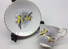 Vintage Queens Rosina China Birds Of America Series 1 Cup And Saucer
