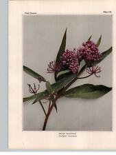 1934 Wildflower Book Plate Swamp Milkweed and Butterfly Weed