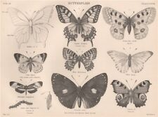 BUTTERFLIES. Swallow tail. Apollo. Pale-clouded yellow. Peacock 1898 old print