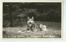 1950's Alaskan Malamute Dog Chinook Kennels Tamworth Nh Real Photo Postcard
