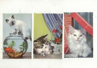 """FIVE REAL PHOTO POSTCARDS OF """" CATS"""" circa 1950s"""