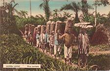 """OLD COLOUR POSTCARD, """" RICE CARRIERS SIERRA LEONE.""""  *"""