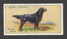 Rare 1936 UK Dog Art Full Body Portrait Ogden's Cigarette Card GORDON SETTER