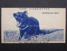 No.10 TASMANIAN DEVIL - Zoo Animals - Carreras / Turf Slides (Plain back) 1954