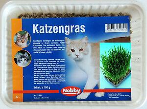 Katzengras 100 g selber ziehen Saatgut mit Saatschale deutsche Anleitung Futter
