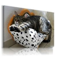 PAINTING DRAWING CATS KITTENS ANIMALS PRINT Canvas Wall Art Picture R68 MATAGA