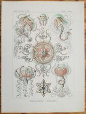 ERNST HAECKEL: Kunstformen Trachomedusae Jellyfish (No. 26) 1st. Edition - 1900