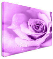 Full Purple Rose Floral Flower Canvas Wall Art Picture Print