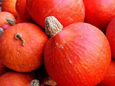 10PCs Seeds Red Kuri Winter Squash Teardrop Shaped Hubbard Bright Orange Skin