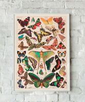 Vintage Butterfly Print, Butterfly Artwork, Vintage Butterflies, Butterfly Wall
